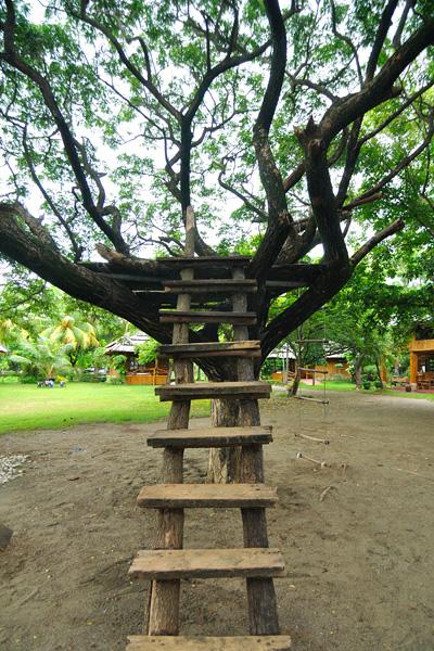 tree-ladder